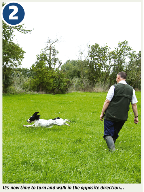 Gundog training - quartering