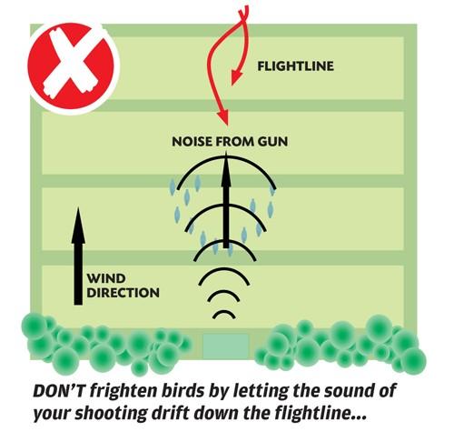 Pigeon shooting in winter plans
