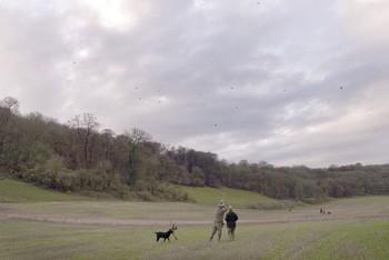 Partridge & pheasant shooting in Angmering, West Sussex - Shooting UK
