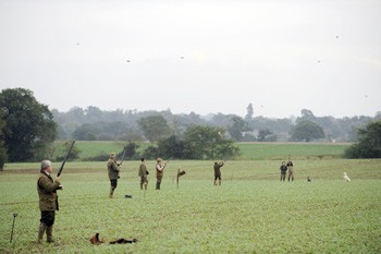 Game shooting at Stowlangtoft, Suffolk