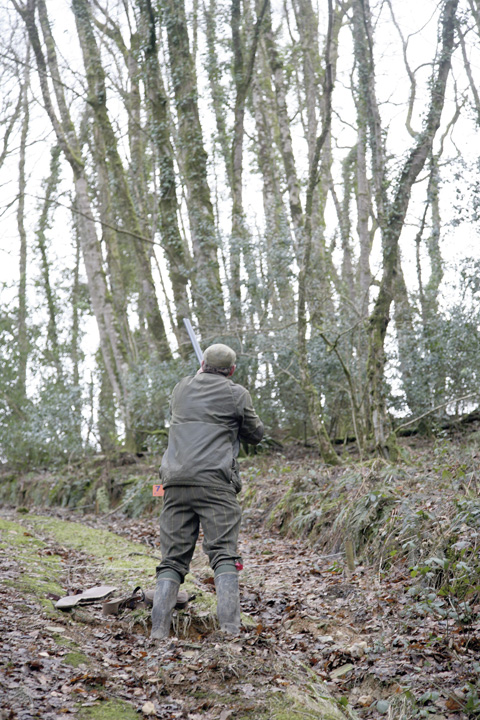 Game shooting Hembury