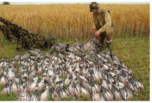 pigeon shooting final bag