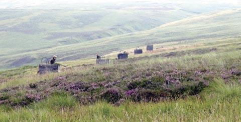 Hartside Moor