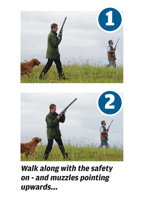 Tips for walked-up pheasant shooting