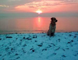 gundog wildfowling on estuary.jpg