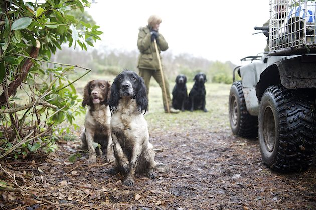 Are British gundogs the best in the world?