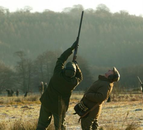 high pheasant shooting