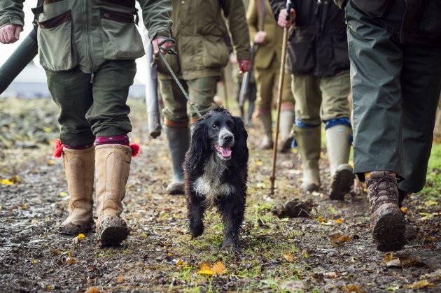 gundog with walkers