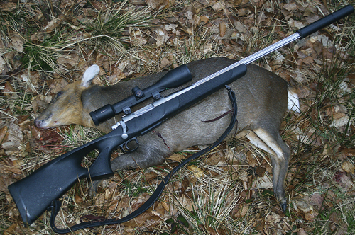 Custom built deer stalking rifle