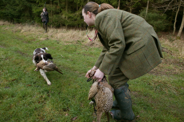 Whistles and working dogs – some frequently asked questions