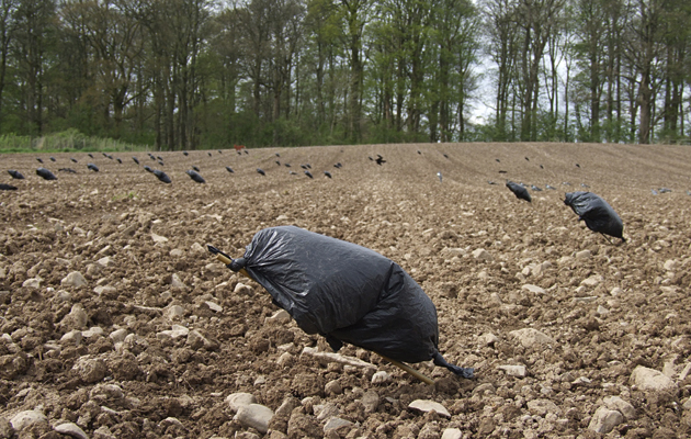 Video: How to make a crow rag decoy