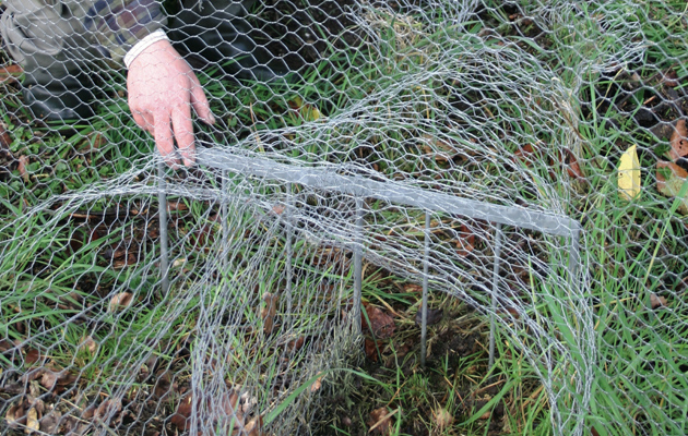 How To Keep Predators Out Of Your Pheasant Pen Shooting Uk