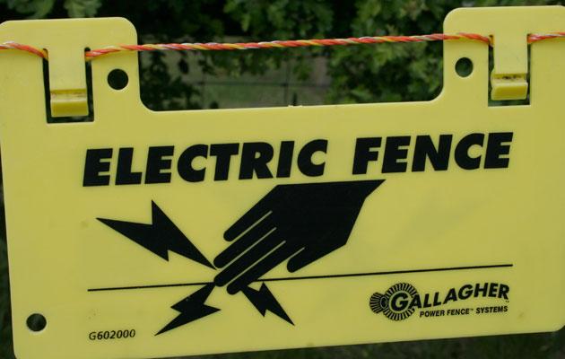 Do electric fences hurt gundogs