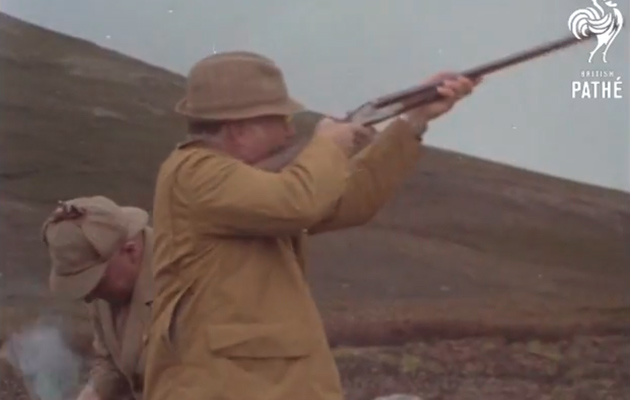 grouse shooting archive video