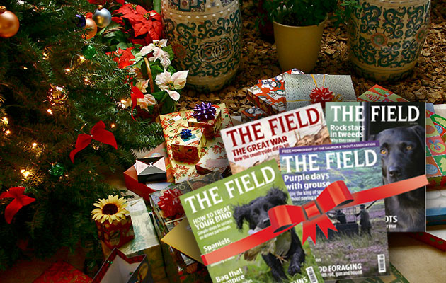 subscribe to the Field this Christmas