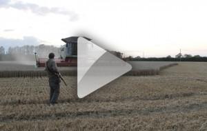 harvest shooting