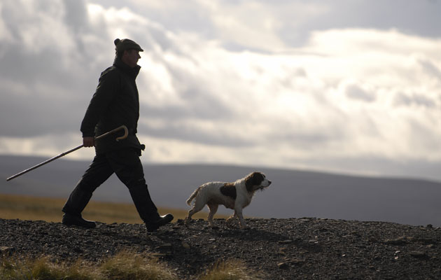 walked-up grouse shooting
