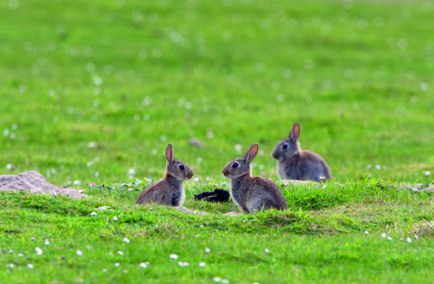 Tips for shooting rabbits out in the field for cooking