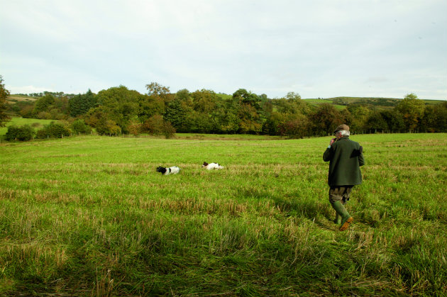 in field with gundogs