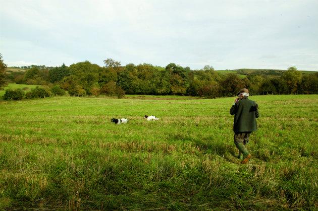 in field with gundogs