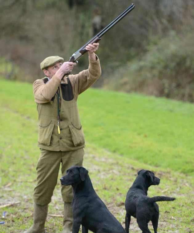 man shooting with dogs