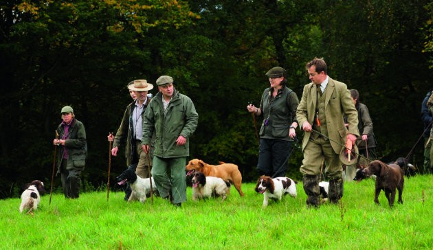 Why Beaters Dogs Have It Best Shooting Uk