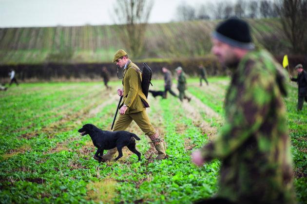 Beating and picking-up - Shooting UK