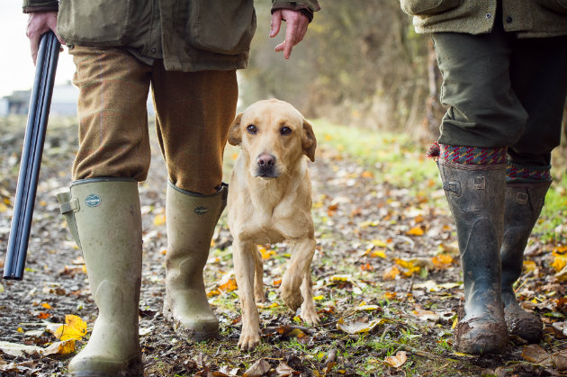 Bad habits in Labradors - how to stop your gundog picking them up