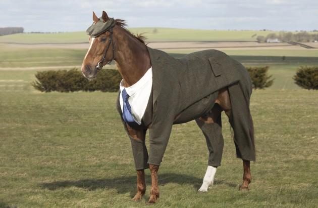 Horse wears tweed suit