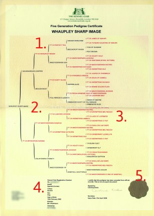 What to look for in a gundog's pedigree certificate