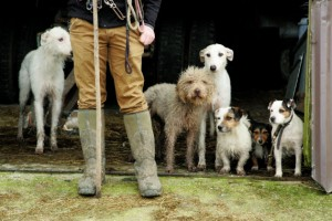 Best Dog Kennels South Wales