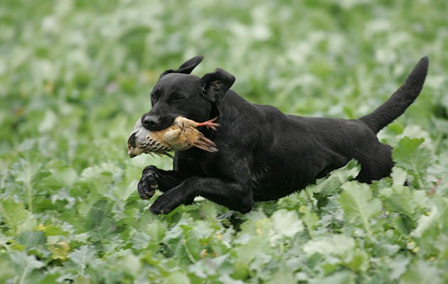 Pedigree dog health