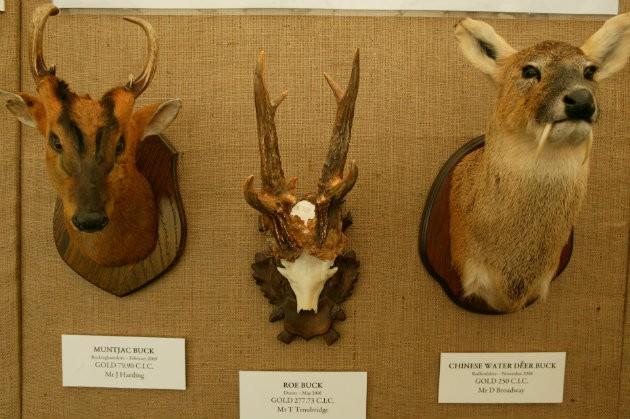 deer trophies