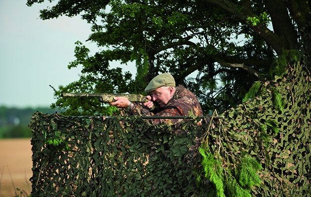 How to shoot more pigeon from a hide
