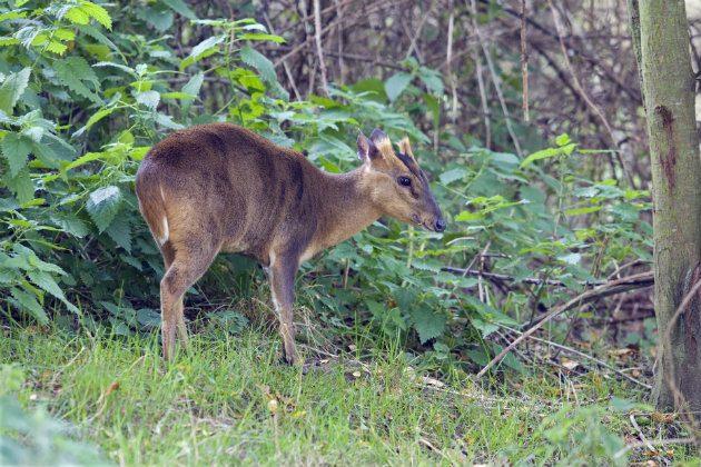 Deer Seasons When Is It Open Season For Shooting