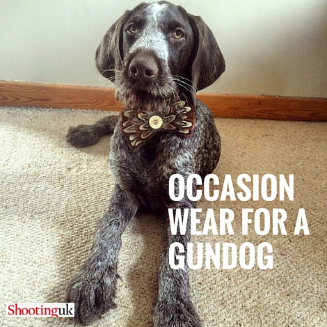 OCCASION-WEAR FOR A GUNDOG