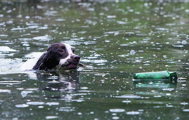 water retrieves