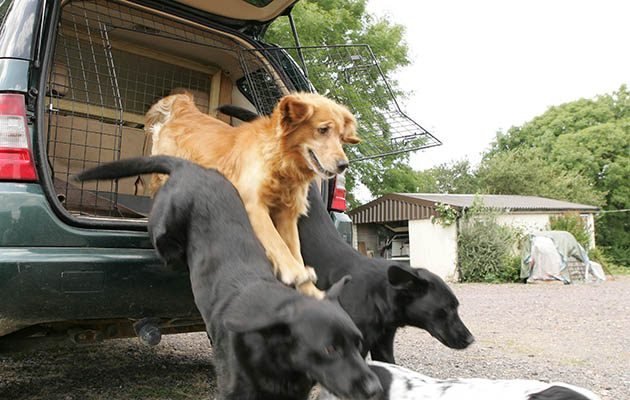 Keep dogs safe from car collisions