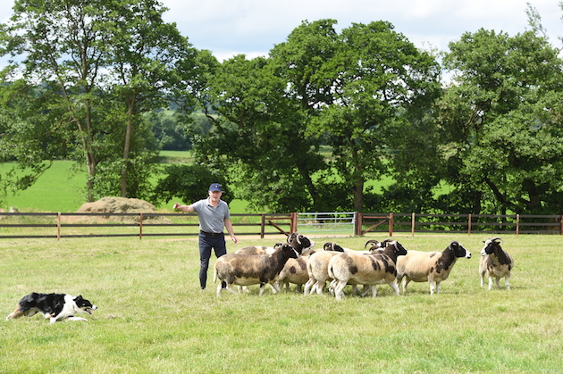 Price of trained dogs - what should you expect to pay?