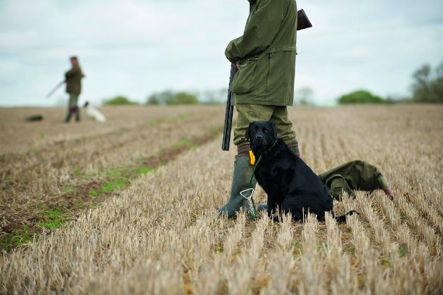 Gundog with picker-up