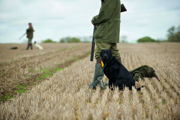 Gundog running-in - how can you stop this bad habit?