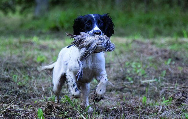 gundogs with shot and cold game
