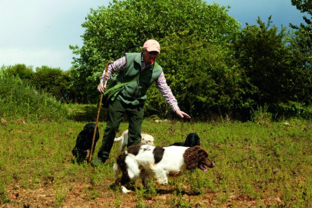 handler with spaniels