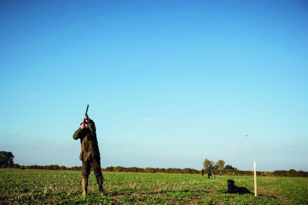 man shooting pheasants in field