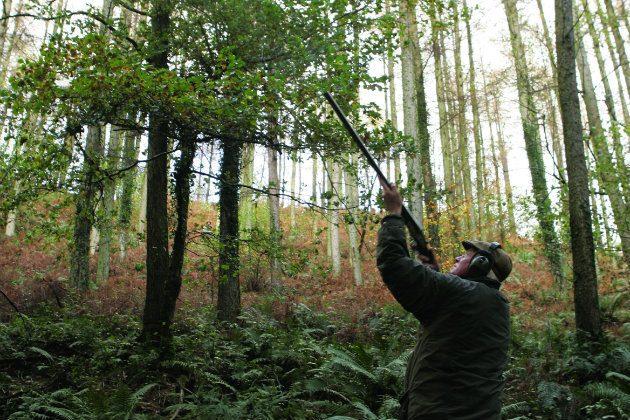Man snap shooting pheasant