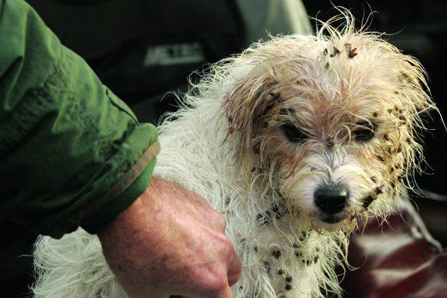 Types Of Terrier Dog Breeds