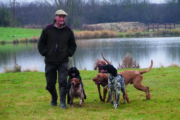hunt, point and retrieve gundog?