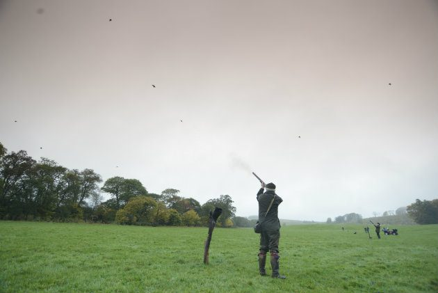 Shooting birds in the field