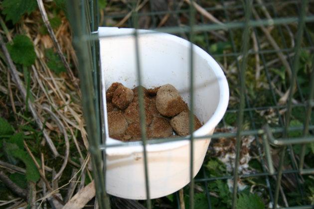 dog kibble in Larsen trap