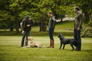 Gundog training at Gleneagles